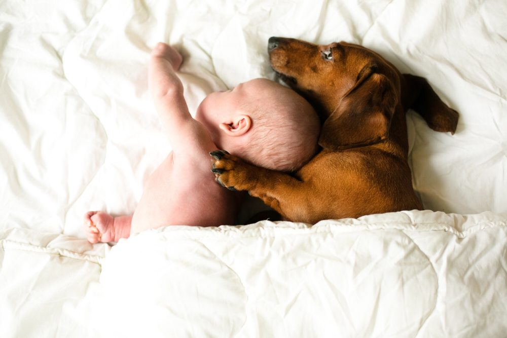 Pet, Celeb and Other Baby Name News of the Week